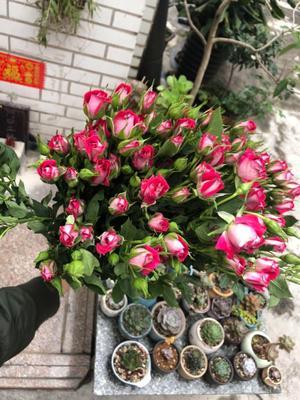云南省昆明市盘龙区切花玫瑰