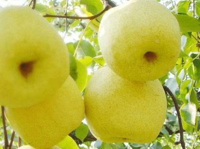 这是一张关于酥梨 6-8g 70mm以上 的产品图片