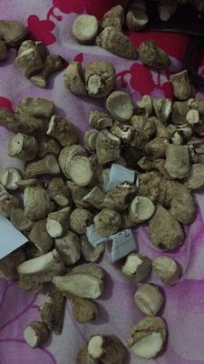 河南省洛阳市汝阳县香菇腿干 袋装 1年以上