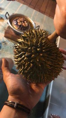 江苏省苏州市常熟市托曼尼榴莲 80 - 90%以上 1.3公斤