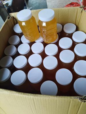 湖南省邵阳市邵东县土蜂蜜 塑料瓶装 95%以上 2年