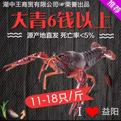 湖南省益阳市南县青壳小龙虾 人工殖养 7-9钱