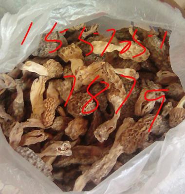 湖北省恩施土家族苗族自治州恩施市干羊肚菌 散装 1年