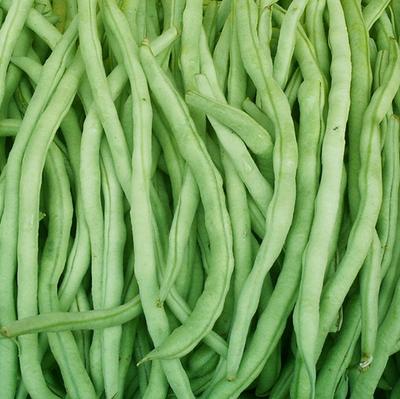 四川省泸州市江阳区花皮菜豆 25cm以上