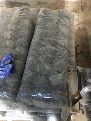 这是一张关于海带丝的产品图片