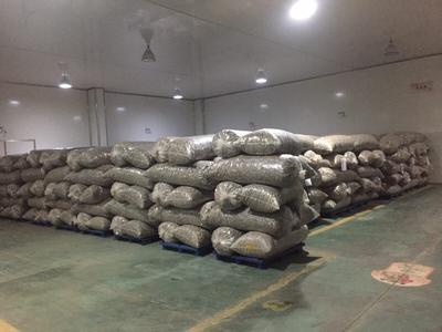 湖北省随州市曾都区光面菇9608 散装 1年以上