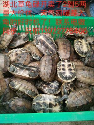 广东省广州市番禺区湖北草