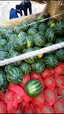 山东省聊城市莘县甜王西瓜 有籽 1茬 8成熟 8斤打底