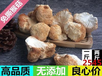福建省宁德市古田县古田猴头菇 3~5cm
