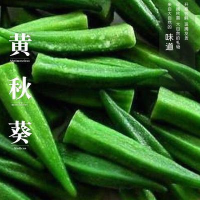 四川省遂宁市蓬溪县黄秋葵 8 - 10cm