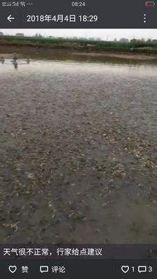 湖北省荆州市公安县池塘黄颡鱼 人工殖养 0.1公斤