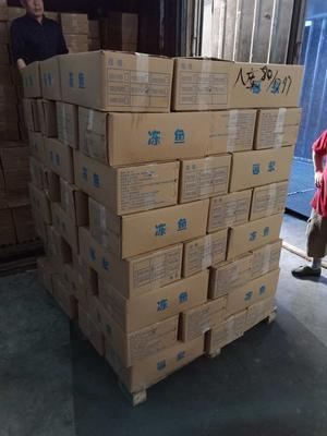 广东省深圳市宝安区野生黑鱼 人工养殖 4-6公斤