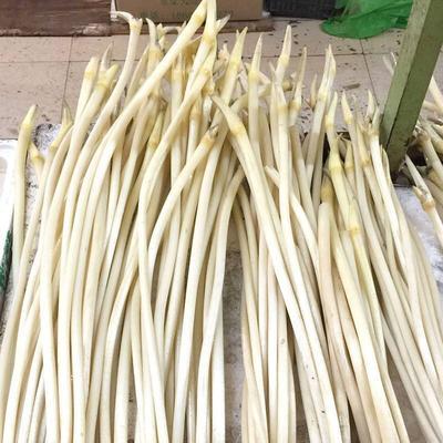 湖北省武汉市汉南区白玉簪藕带 50cm以上