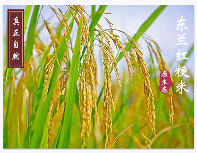 广西壮族自治区河池市宜州市富硒红米