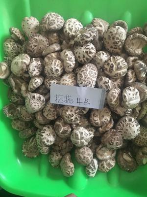 湖北省随州市广水市花菇 3.0 - 3.5cm 一级