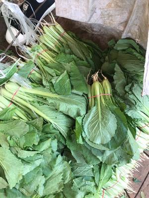 陕西省西安市雁塔区速生小白菜 20~25公分