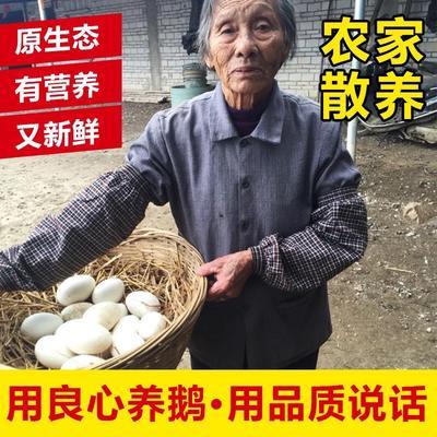 广东省阳江市阳东县土鹅蛋 食用 箱装