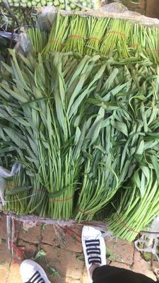 陕西省西安市雁塔区竹叶空心菜 30 ~ 35cm