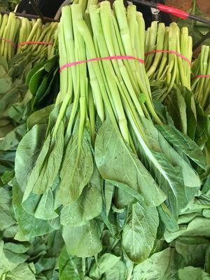 陕西省西安市雁塔区尖叶菜心 25~30cm