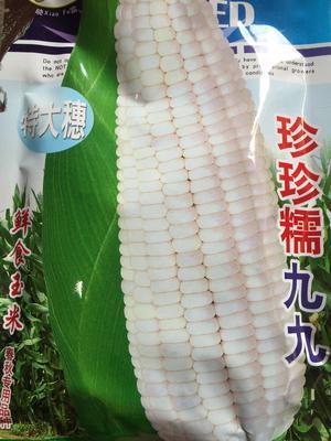 广东省湛江市遂溪县玉米种子