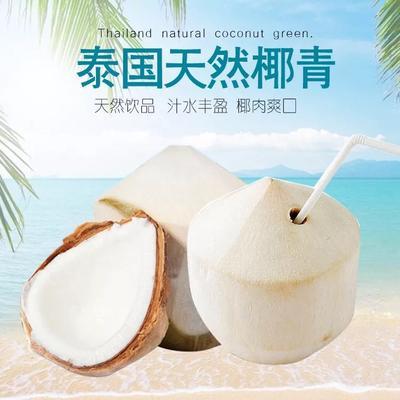 广西壮族自治区崇左市凭祥市椰青 1.5 - 2斤