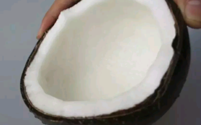 海南省琼海市琼海市高种椰子 2 - 2.5斤