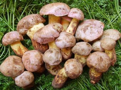 云南省普洱市宁洱哈尼族彝族自治县野生菌罐头 24个月以上