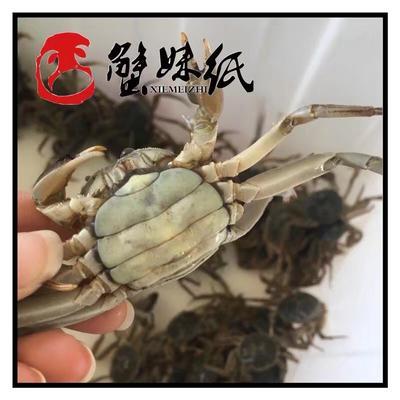 江苏省南京市高淳区固城湖大闸蟹 2.0两以下 统货