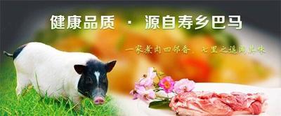 江西省抚州市宜黄县巴马香猪 40-60斤