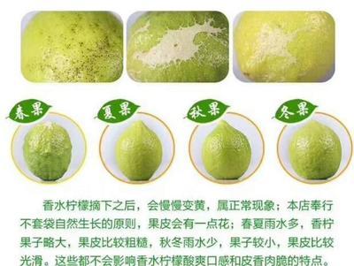 广东省江门市恩平市台湾无籽柠檬 2.7 - 3.2两