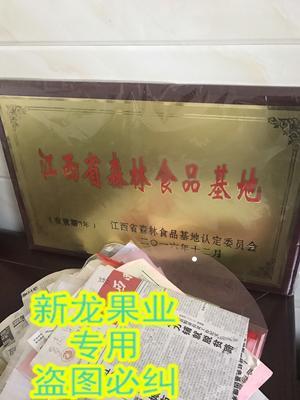 江西省新余市渝水区茶叶籽油