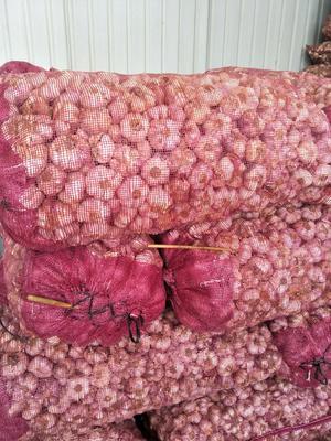 云南省大理白族自治州宾川县红皮大蒜 5~5.5cm 多瓣蒜