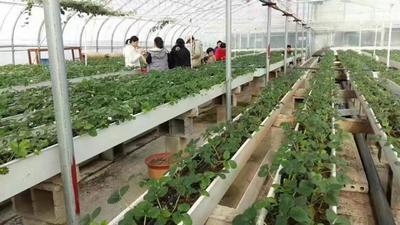 山东省菏泽市鄄城县滴灌喷灌