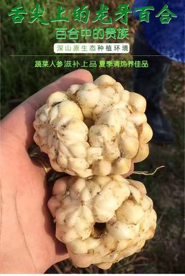 江西省吉安市永丰县龙牙百合干 1年以上 一级