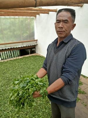 云南省昆明市呈贡区大叶工夫红茶 袋装 特级