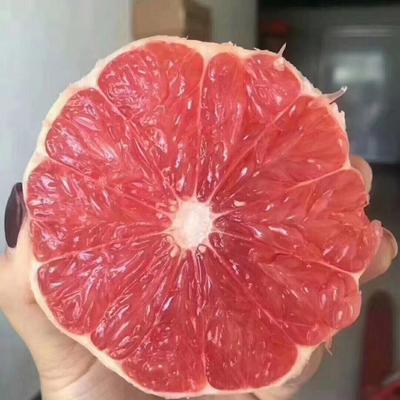广西壮族自治区桂林市七星区南非西柚 1斤以下