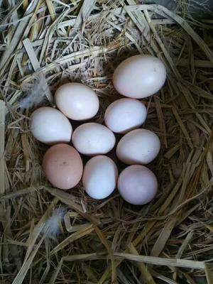 湖南省郴州市资兴市土鸡蛋 食用 散装