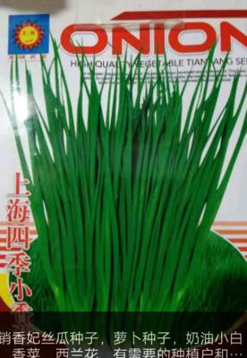 甘肃省天水市甘谷县小香葱种子