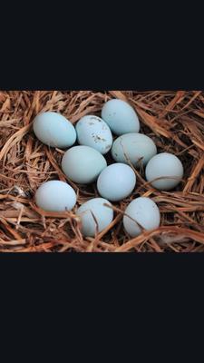 陕西省铜川市耀州区绿壳鸡蛋 食用 散装