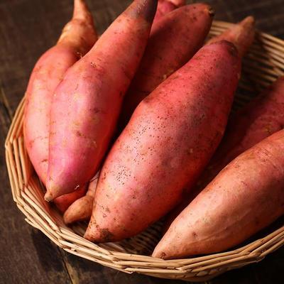 山东省济南市章丘市烟薯25 红皮 5两以上