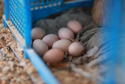 上海宝山区土鸡蛋 食用 简包装