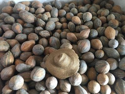 广西壮族自治区北海市合浦县香芋南瓜 2~4斤 长条形