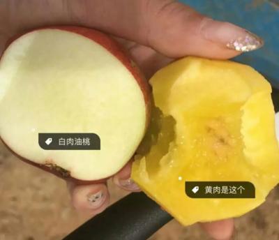 云南省丽江市玉龙纳西族自治县云南油桃 1两以上 50mm以上