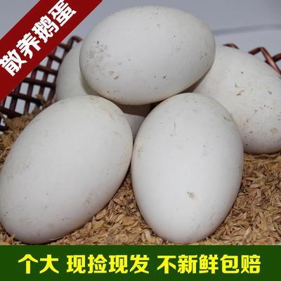 福建省漳州市诏安县狮头鹅蛋 食用 箱装