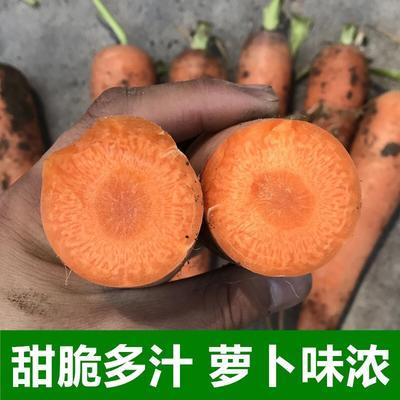 上海松江区三红胡萝卜 15cm以上 2两以上 5cm以上