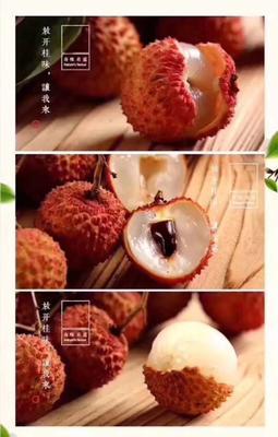 广东省惠州市惠城区桂味荔枝 1.5cm