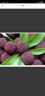 这是一张关于东魁杨梅 3 - 4cm的产品图片