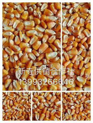 这是一张关于玉米干粮 霉变≤2% 毛货的产品图片