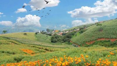 云南省红河哈尼族彝族自治州个旧市玉米干粮 霉变≤1% 杂质很少