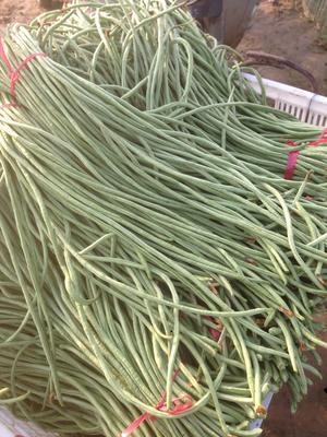 河北省邯郸市大名县一线天豇豆 70cm以上 不打冷